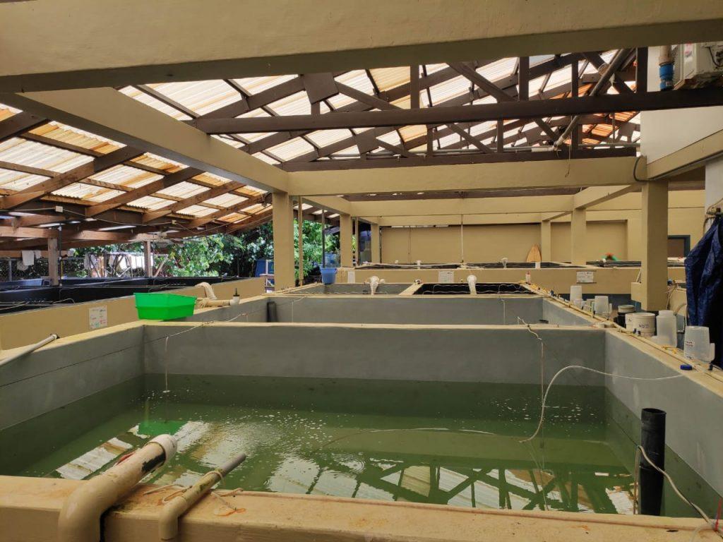 Instalaciones de Biota Marine Life Nursery