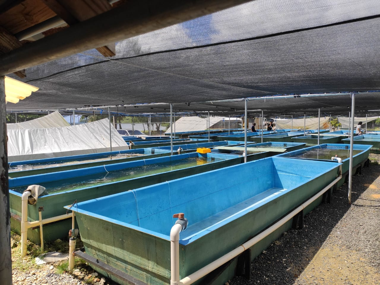 Instalaciones de Biota Marine Life Nursery en las Islas Palu