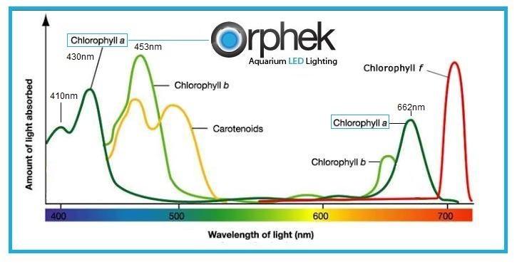 Espectros de absorción de varios pigmentos fotosintéticos